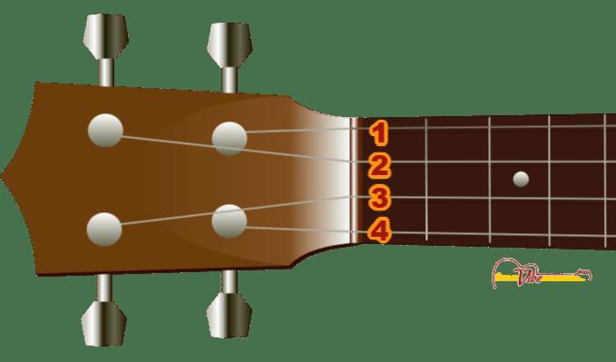 Ukulele String Numbers