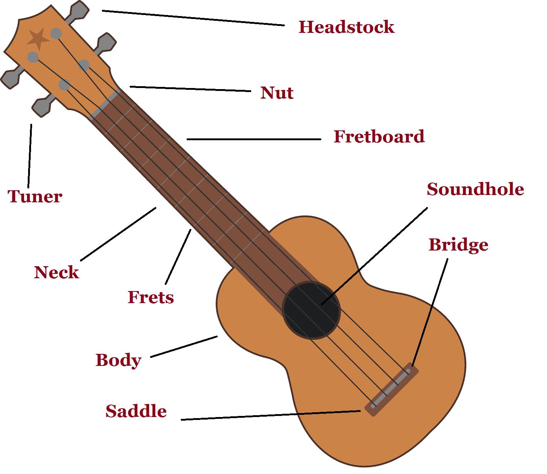 Parts-of-the-Ukulele